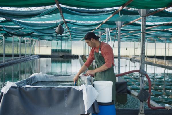 Employé travaillant dans un bassin de production de spiruline